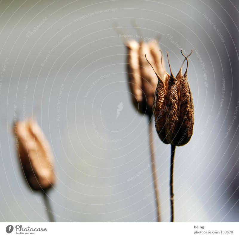 Metamorphosis II Autumn Faded Plant Flower Dry Death Brown filler