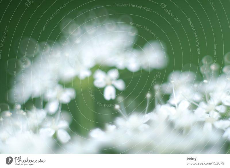 Metamorphosis I Spring Blossoming Plant Flower Fresh Green in full juice filler