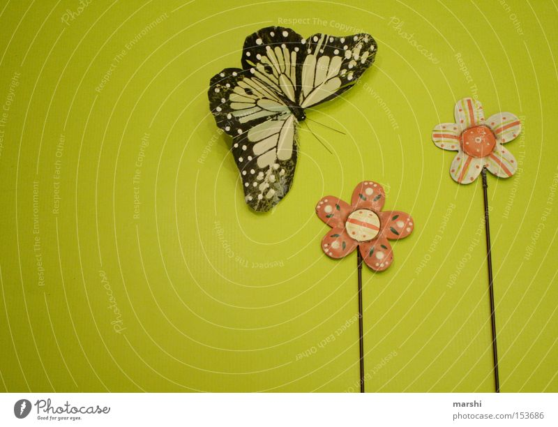 Flower Green Joy Emotions Jump Spring Longing Butterfly Miss Seasons