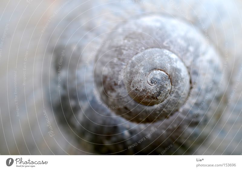 Nature White Calm Background picture Decoration Round Depth of field Meditation Spiral Snail Sheath Science & Research Focal point Snail shell Rotated