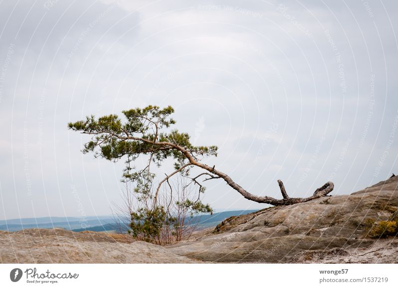 Sky Nature Old Green Tree Landscape Clouds Autumn Gray Stone Brown Rock Horizon Air Earth Individual