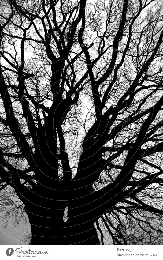 Network Tree Forest Impressive Dark Black Twilight Contrast Branched Calm Grief Transience Curiosity Landscape Black & white photo Trust Winter Old