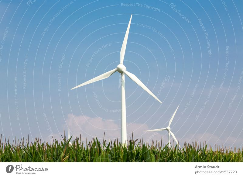 wind power Lifestyle Design Harmonious Far-off places Freedom Summer Environment Nature Landscape Air Sky Wind Field Maize field Agriculture Power Innovative