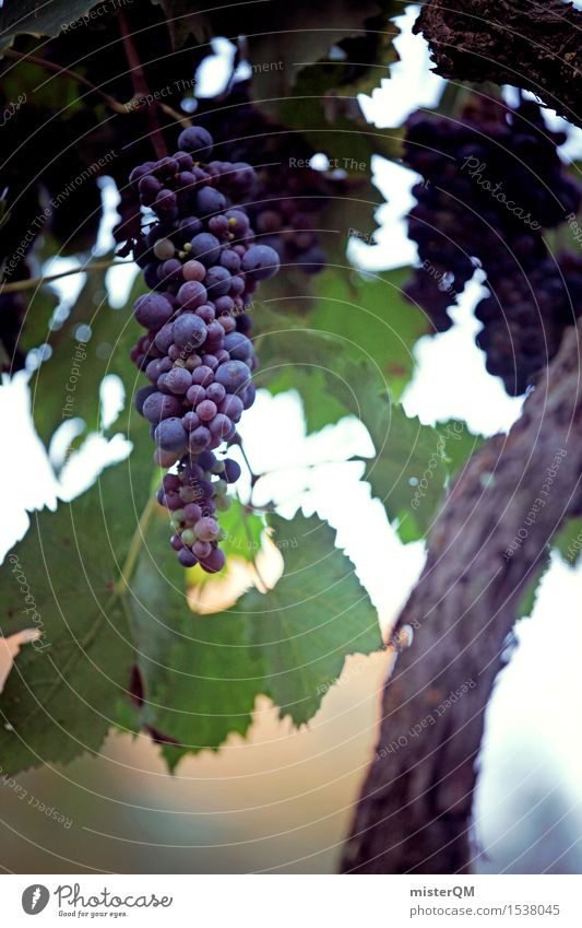 Wine on a stick. Art Work of art Esthetic Vine Vineyard Wine growing Bunch of grapes Grape harvest Winery Mature Delicious Organic produce Tuscany Italy