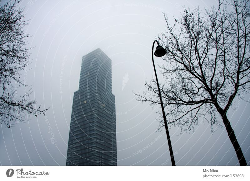 Tree City Loneliness Window Gray Building Germany Fog High-rise Modern Street lighting Office building Concrete block