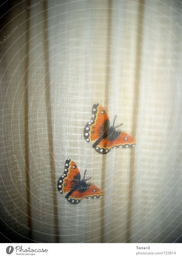 butterfly Butterfly Double exposure Joy Kitsch Love Red admiral Drape Shadow Insect Animal Flying animal Spring Summer Orange Beautiful In pairs Related