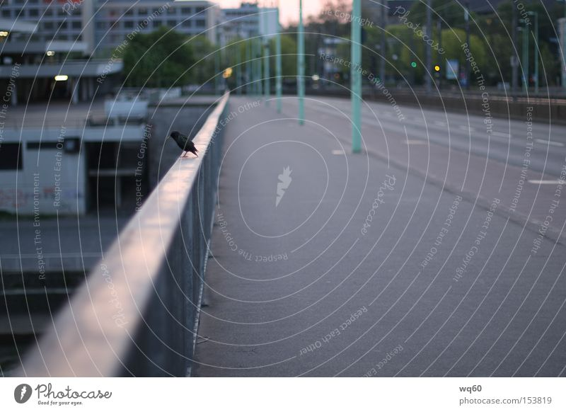 suicidal Cologne Severins bridge Bird Loneliness Bridge Jump Street Animal Starling Morning Bridge railing Dangerous Tram Emotions
