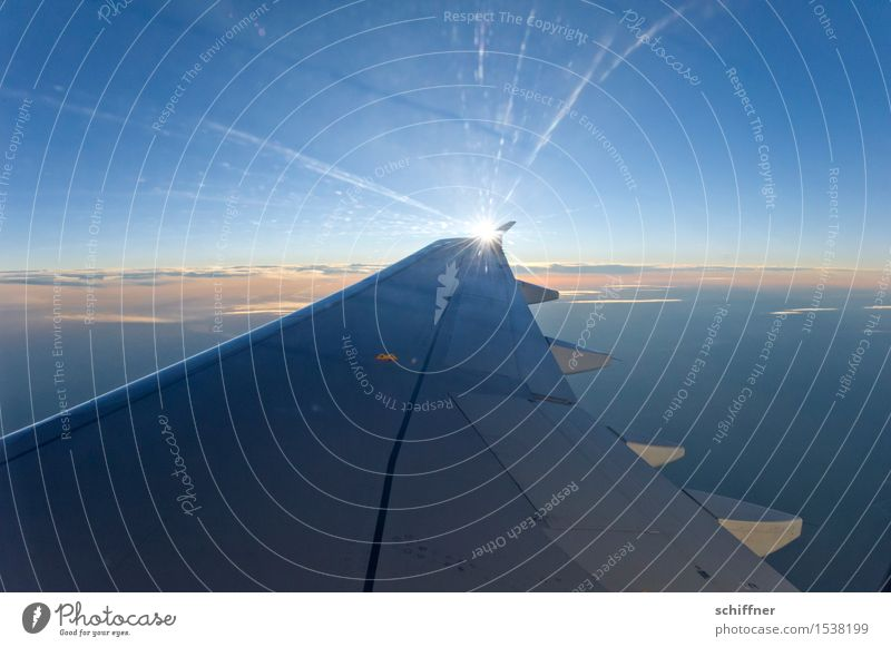 sun wing Sky Sky only Cloudless sky Clouds Sun Sunrise Sunset Sunlight Beautiful weather Aviation Airplane Passenger plane View from the airplane Blue Freedom