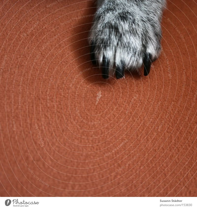 GimMe Five! Dog Paw Animal Hair Claw Cut Black White Orange Sofa Seating Bolster Growl Mammal