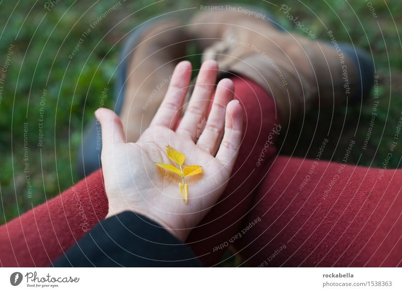 Leaf on palm of hand Hand Autumn Yellow Safety (feeling of) Colour photo Exterior shot Shallow depth of field