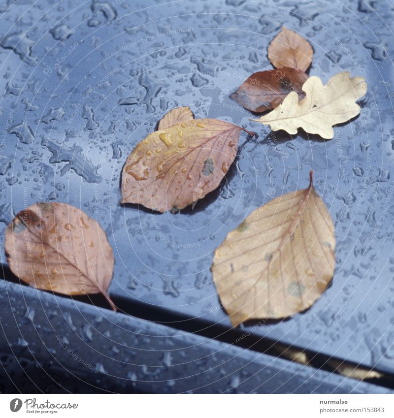 autumn remains Autumn Leaf Beech tree Oak tree Drops of water Carriage Varnish Column Eerie Rain Gray Black Edge October Slide Film Colour