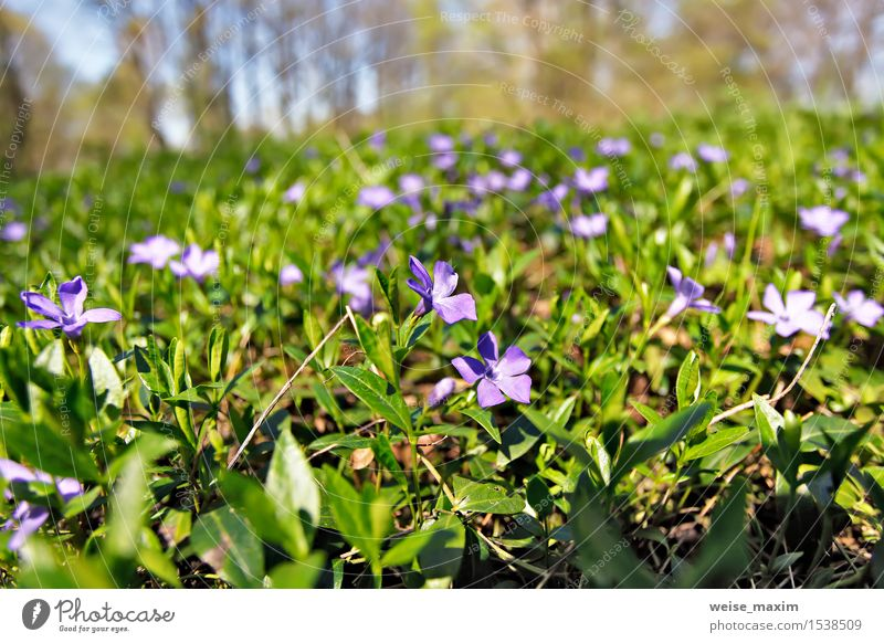 Spring flowers. Young green leaves and flowers. Beautiful Life Summer Sun Environment Nature Plant Sky Tree Flower Leaf Blossom Foliage plant Park Forest Growth