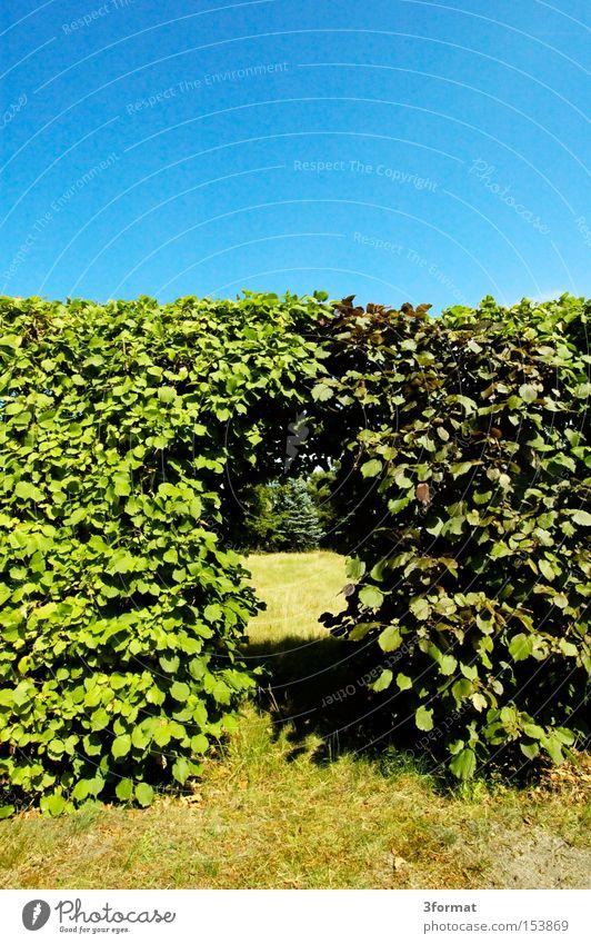 Summer Leaf Warmth Garden Wall (barrier) Sadness Park Door Success Communicate Border Entrance Hedge Passage Intersection Portal