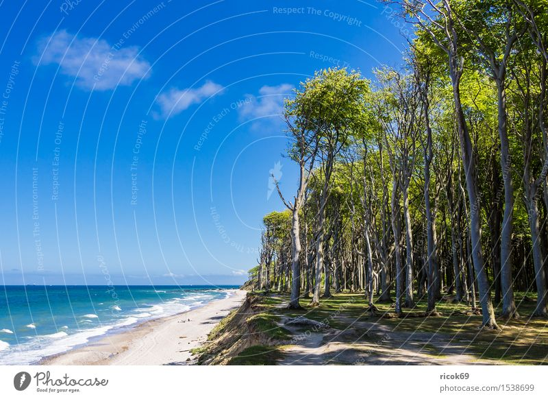 Coastal forest on the Baltic coast Vacation & Travel Tourism Beach Ocean Waves Nature Landscape Clouds Tree Forest Baltic Sea Lanes & trails Blue Romance Idyll