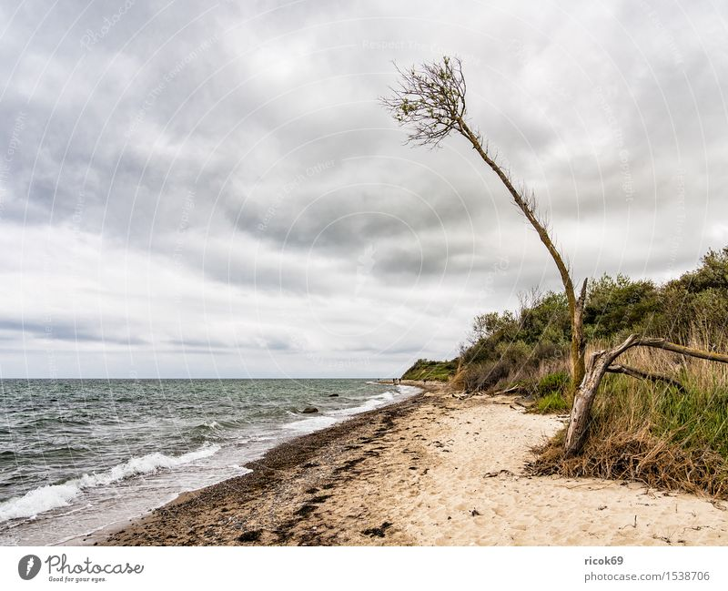 On the coast of the Baltic Sea Relaxation Vacation & Travel Beach Ocean Waves Nature Landscape Water Clouds Tree Coast Idyll Tourism Environment Baltic coast