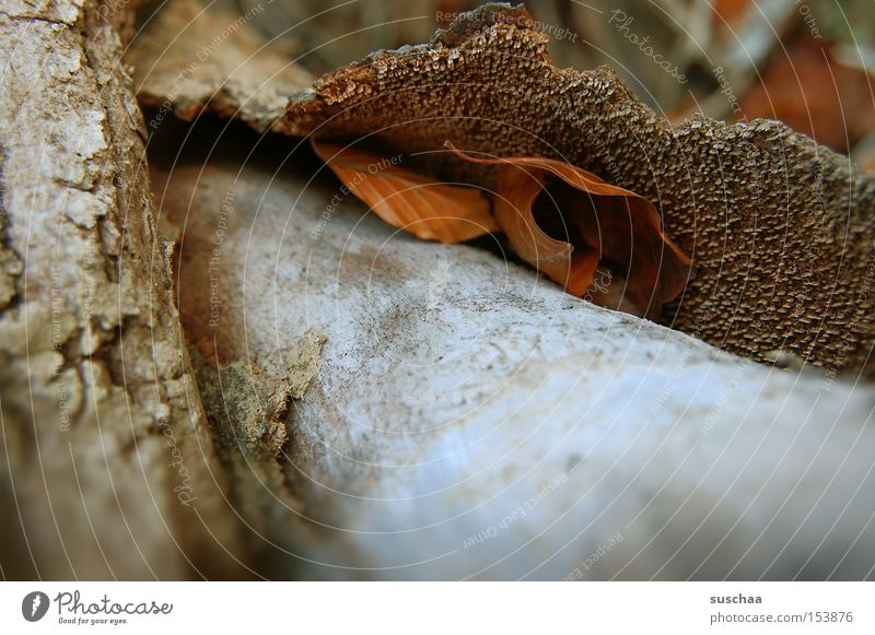 sheltered Tree trunk Wood Tree bark Crust Leaf Nature Environment Surface Cavernous Macro (Extreme close-up) Close-up Bowl Structures and shapes Exterior shot