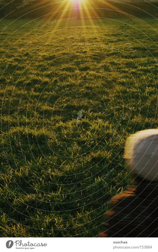 outside with e.... Meadow Grass Green Green space Sun Light Shaft of light Sunbeam Cap Headwear Autumn Pasture Lawn