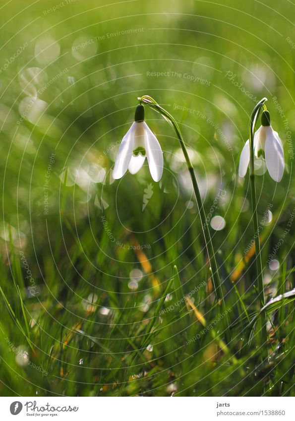 at the beginning of spring Plant Drops of water Spring Beautiful weather Flower Blossom Wild plant Meadow Blossoming Fragrance Wet Natural Spring fever Nature