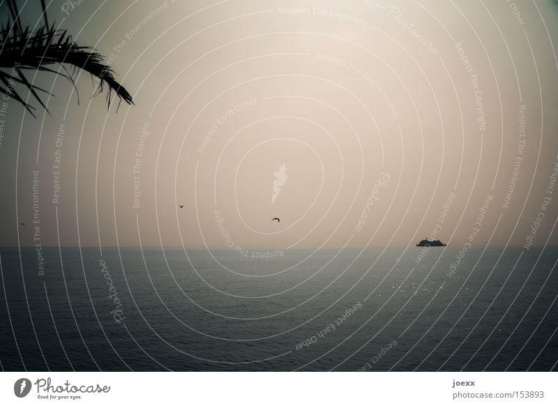Sky Ocean Beach Vacation & Travel Dream Watercraft Coast Horizon Longing Palm tree Navigation Seagull Wanderlust Home Homesickness