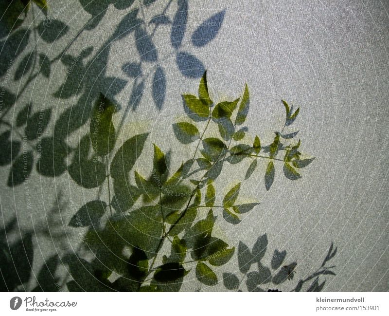 Behind the shadow wall Shadow Silhouette Plant Bushes Cloth Gray Green Nature