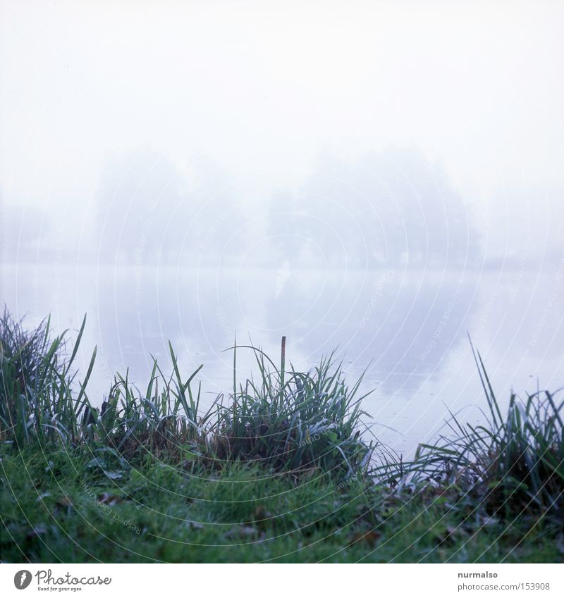 mystic morning Home country Morning Fog Lake Common Reed Mystic Mecklenburg-Western Pomerania Detective novel Crime thriller Lakeside Lawn Green Gray Autumn