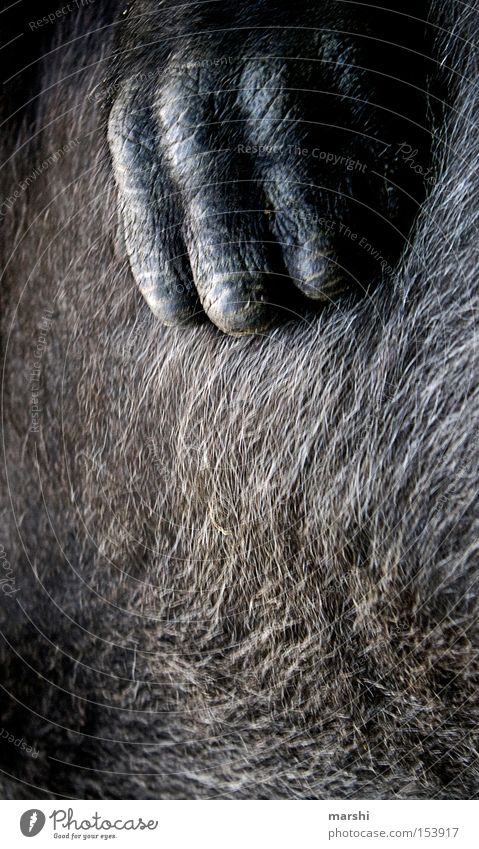 Hand Hair and hairstyles Warmth Brown Pelt Zoo Mammal Monkeys