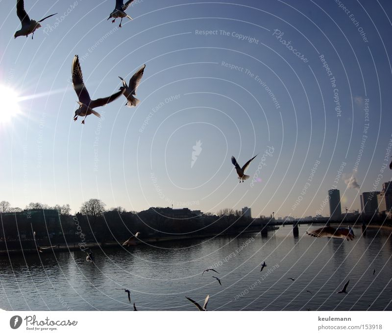 Water Sky Sun Movement Landscape High-rise Transport Seagull