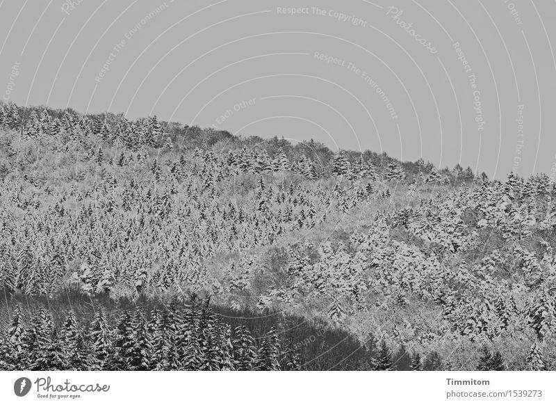 Sky Nature Plant White Landscape Winter Forest Black Cold Natural Snow Gray Esthetic Hill