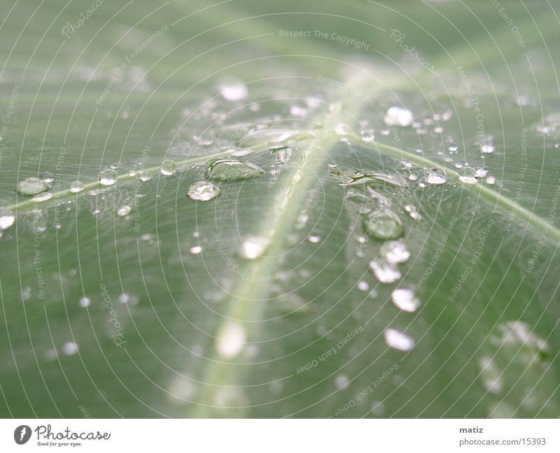 Leaf Drops of water Rope Virgin forest Palm tree