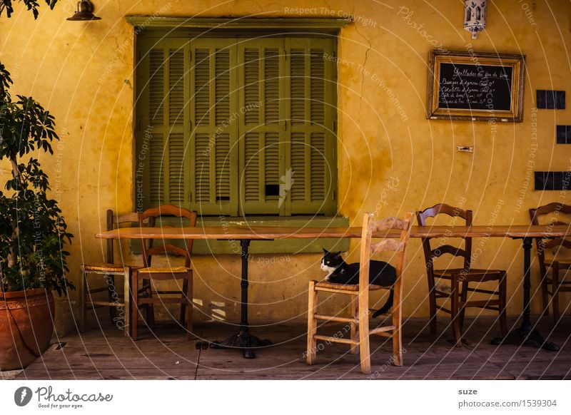 Shortly after noon Chair Table Restaurant Warmth Window Animal Cat 1 Old Emotions Moody Contentment Hospitality Serene Calm Break Time France Corsica