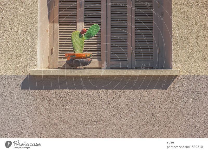Plant Green Loneliness Calm Window Warmth Wall (building) Facade Gloomy Closed Dry France Still Life Corsica Shutter Cactus