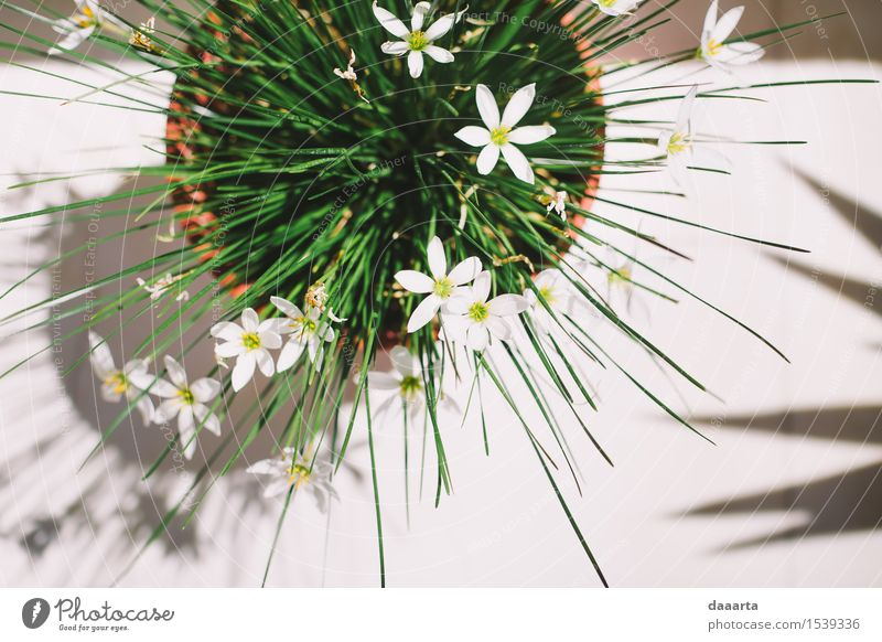 greek flowers Nature Plant Green Beautiful Summer Flower Joy Yellow Warmth Life Interior design Emotions Style Playing Lifestyle Freedom