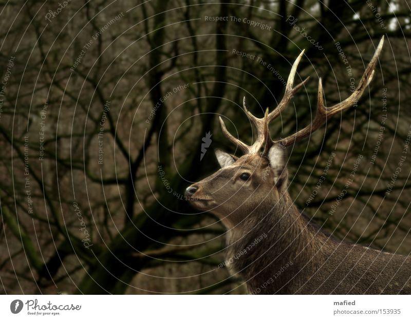 Green Brown Posture Watchfulness Mammal Antlers Beige Pride Caution Deer Animal