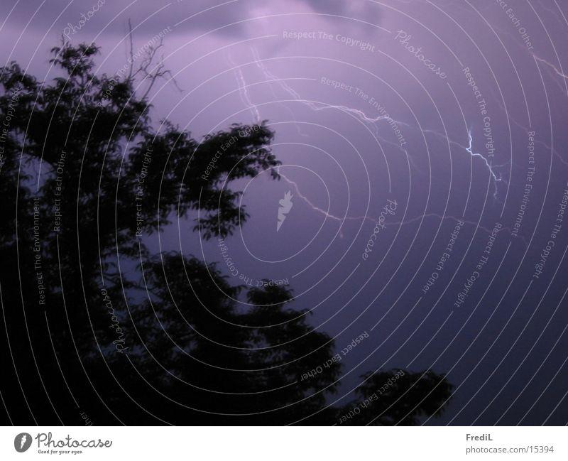 weather light Dark Lightning Tree Thunder and lightning Evening