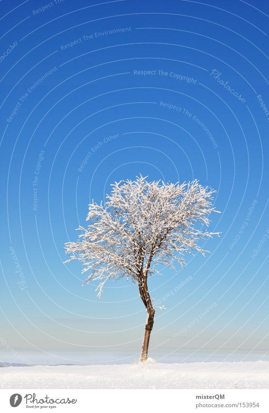 Beautiful White Tree Blue Winter Loneliness Snow Power Force Frozen Beautiful weather Individual Quality Winter vacation