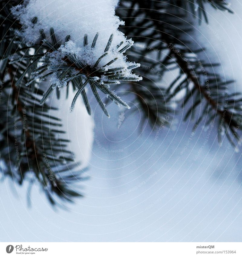 Nature Green White Winter Cold Snow Frozen Christmas tree Twig Fir tree Macro (Extreme close-up) Christmas decoration Coniferous forest Minus degrees