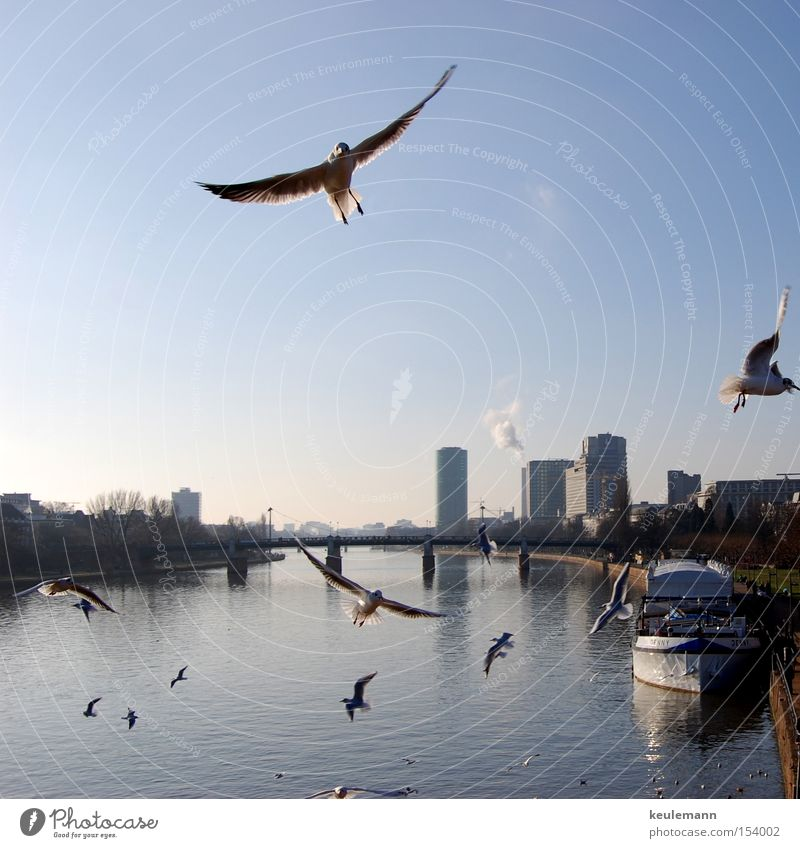 Mövinator Part 2 Seagull Light Water High-rise Play of colours Sunset Animal Movement Bridge Frankfurt