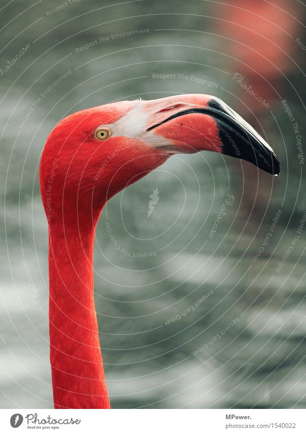 bird two Animal Bird Flamingo Zoo 1 Looking Stand Pink Water Beak Multicoloured Feather Colour photo Exterior shot Deserted Copy Space top Day