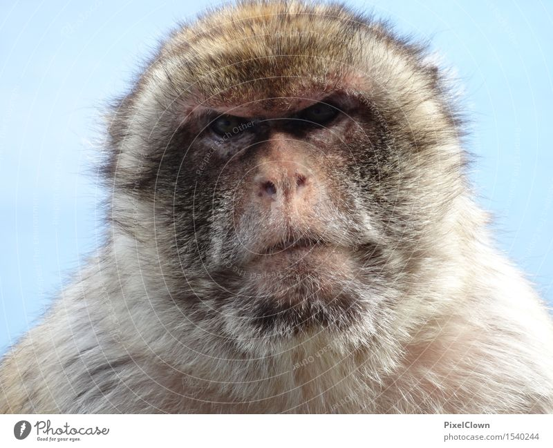 Loneliness Animal Environment Sadness Emotions Gray Wild animal Exotic Zoo