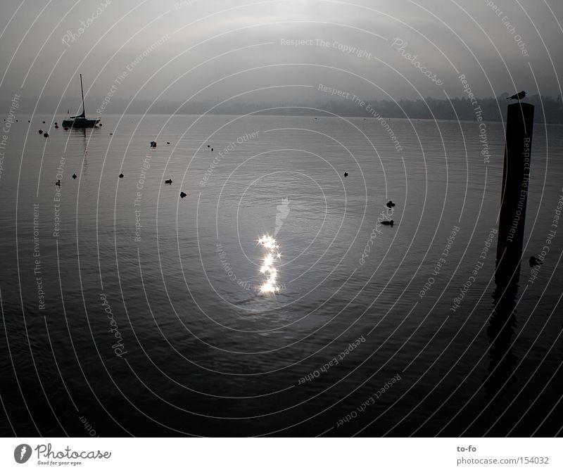 Water Calm Lake Watercraft Star (Symbol) Romance Switzerland Seagull Zurich Lake zurich