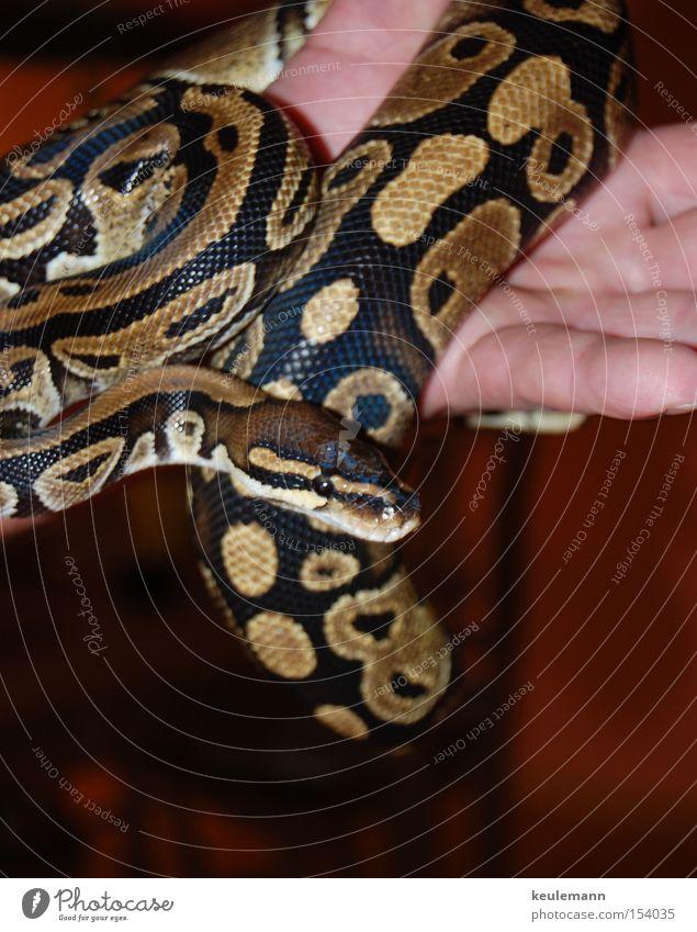 Animal Colour Movement Glittering Dangerous Threat Snake Clever Dexterity