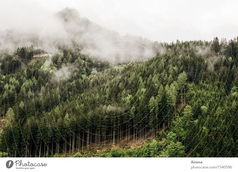 gloomy times Landscape Bad weather Fog Tree Coniferous trees Fir tree Spruce forest Forest Hill Mountain Coniferous forest Mountain forest Threat Dark Gloomy