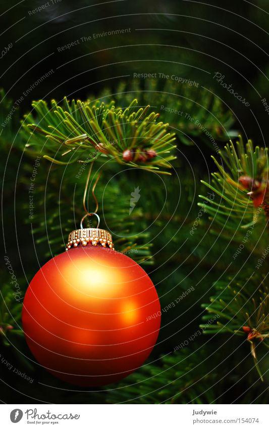 Christmas & Advent Green Winter Orange Gold Round Christmas tree Sphere Fir tree Hang Embellish December Fir needle