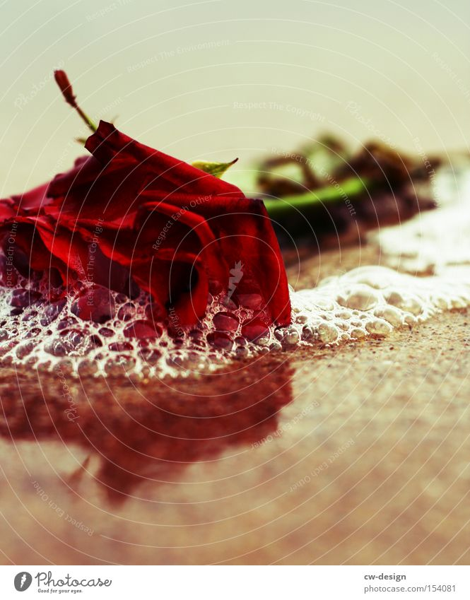 Flower Beach Life Death Sand Decoration Transience Grief Past Rose Belief Distress Cemetery Reflection Grave Funeral