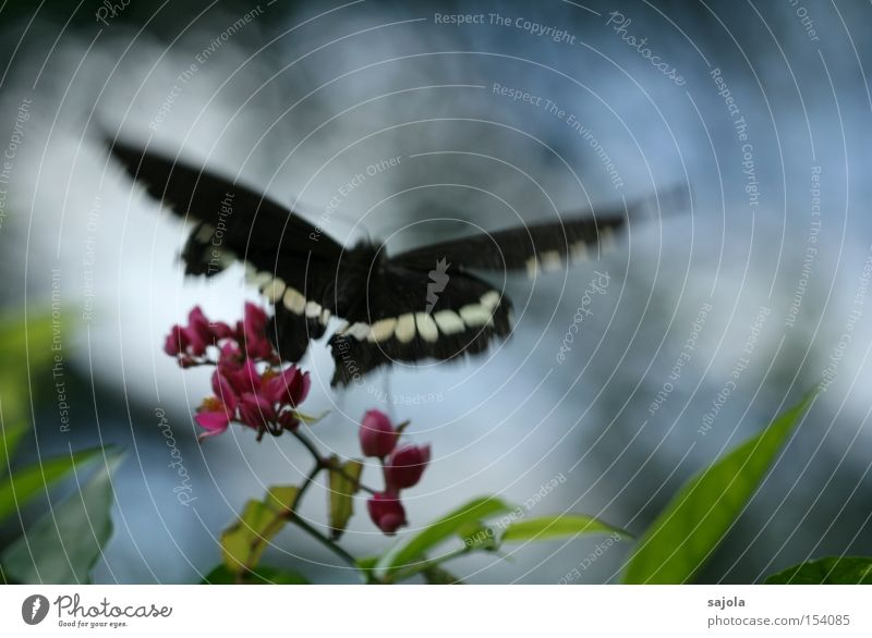 departure Aviation Flower Blossom Butterfly Wing Movement Flying Pink Insect Dynamics Judder Delicate Colour photo Black & white photo Close-up