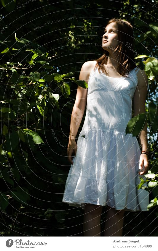 Woman Youth (Young adults) White Summer Leaf Forest Feminine Dress Light Tree bark Marvel Undergrowth