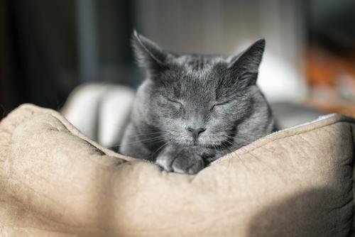 Sunbath Beautiful Face Relaxation Calm House (Residential Structure) Woman Adults Friendship Nature Animal Fur coat Pet Cat Paw Sleep Cute Gray Happy Happiness