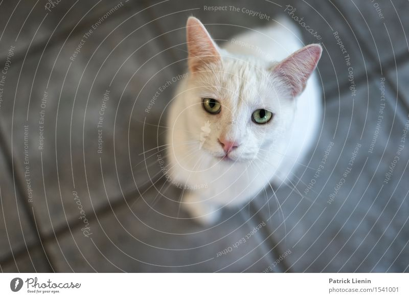 Schau mir in die Augen Cat Nature Beautiful White Relaxation Loneliness House (Residential Structure) Animal Face Friendship Wild Elegant Communicate Stand