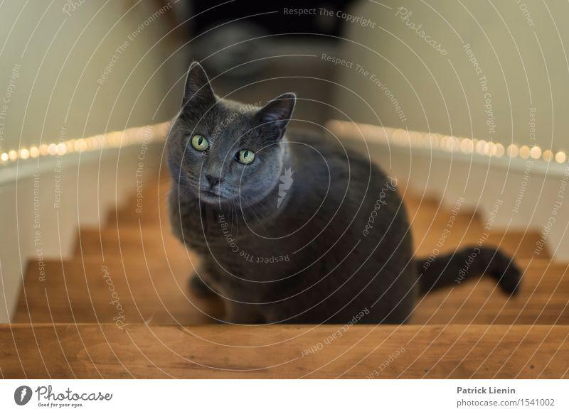 calico cat behavior