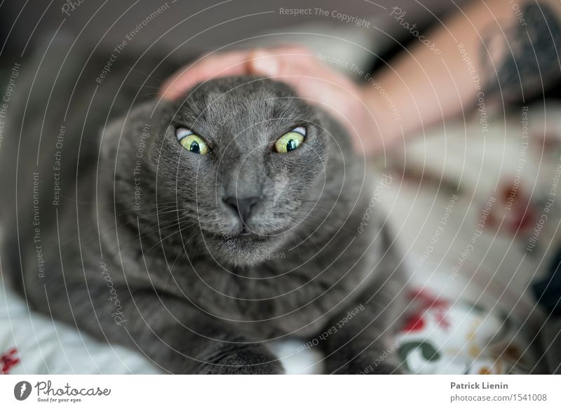 Scary Cowy Cat Woman Nature Beautiful Relaxation House (Residential Structure) Animal Calm Face Adults Gray Friendship Cute Pet Animal face Safety (feeling of)